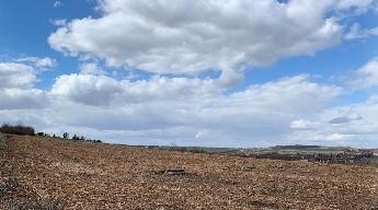 Březen 2019 - Vyčištění pozemku od náletů